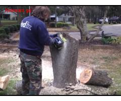 ხის მოჭრა, ძირის ამოძირკვა
